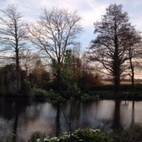 trees by pond