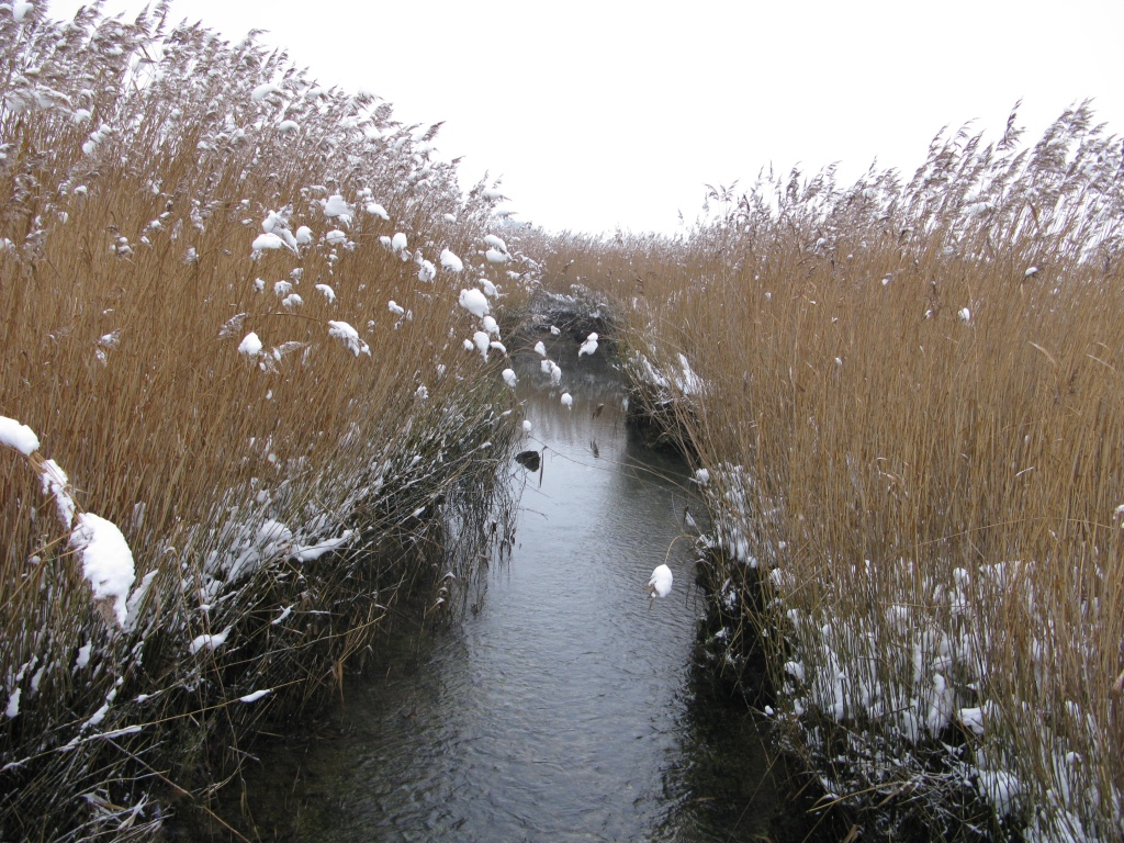 river in reeds