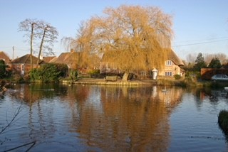 willow and pond